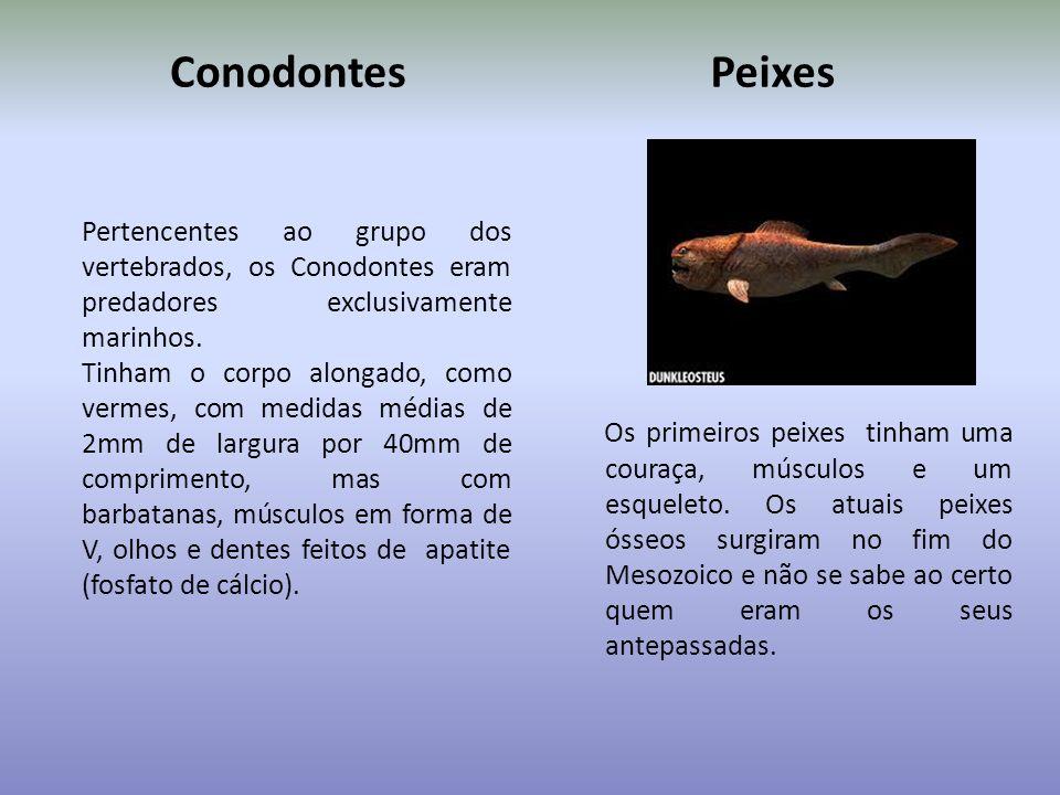 Conodontes Peixes. Pertencentes ao grupo dos vertebrados, os Conodontes eram predadores exclusivamente marinhos.