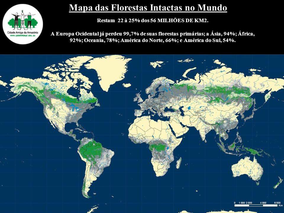 Mapa das Florestas Intactas no Mundo