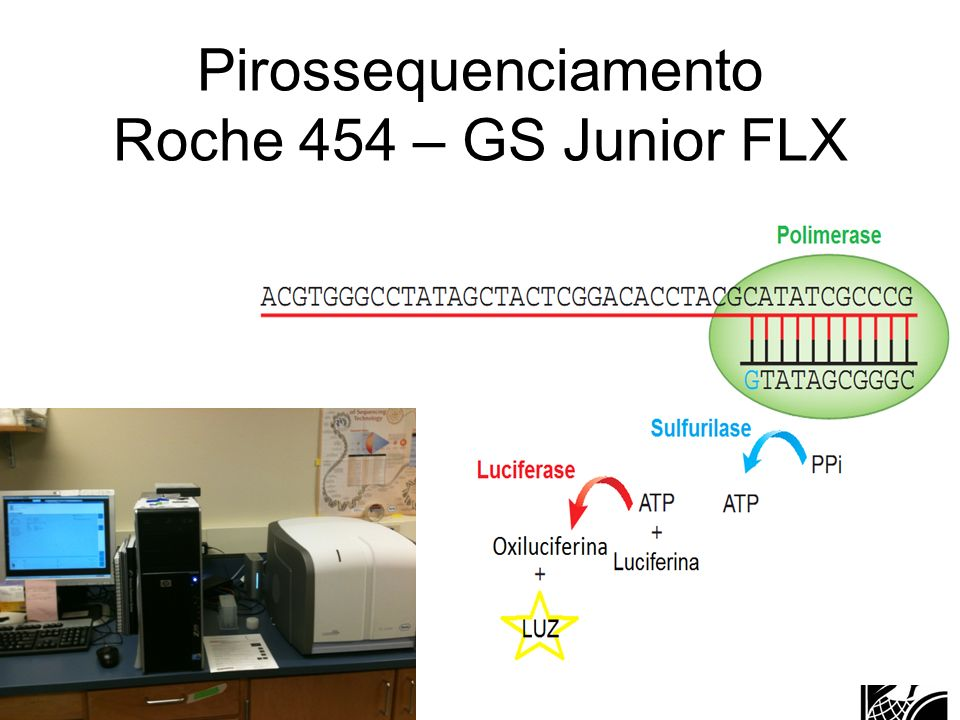 Pirossequenciamento Roche 454 – GS Junior FLX