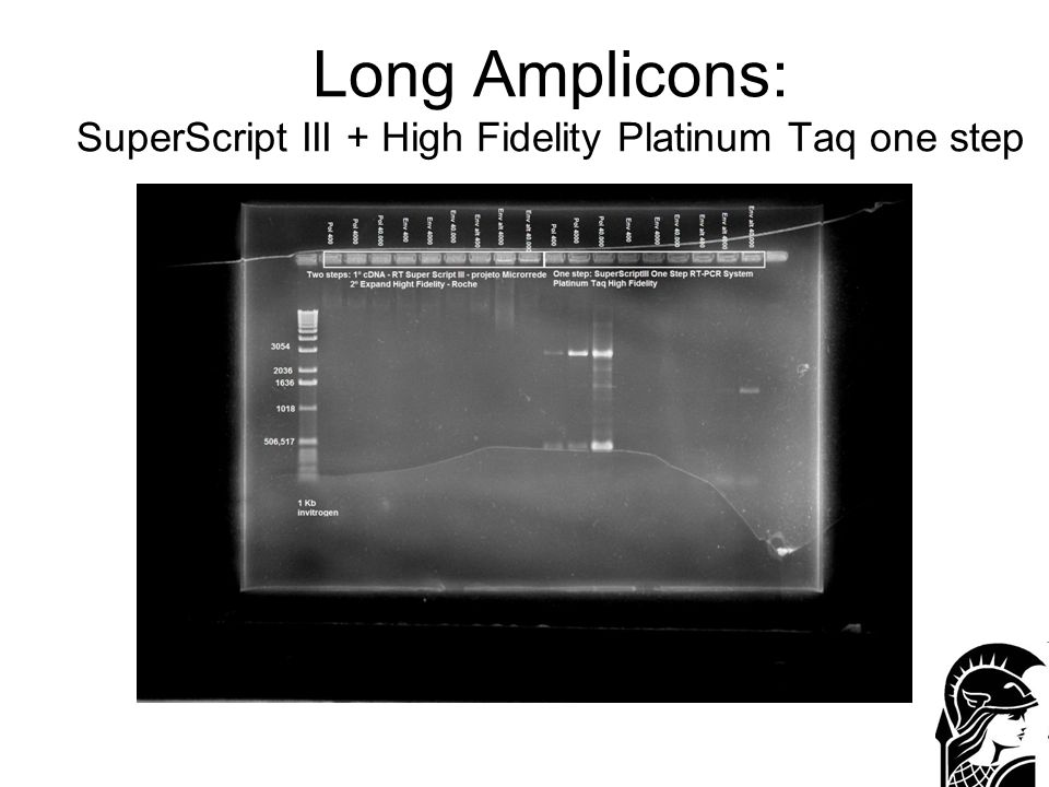 Long Amplicons: SuperScript III + High Fidelity Platinum Taq one step