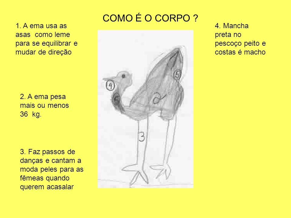 COMO É O CORPO 1. A ema usa as asas como leme para se equilibrar e mudar de direção. 4. Mancha preta no pescoço peito e costas é macho.