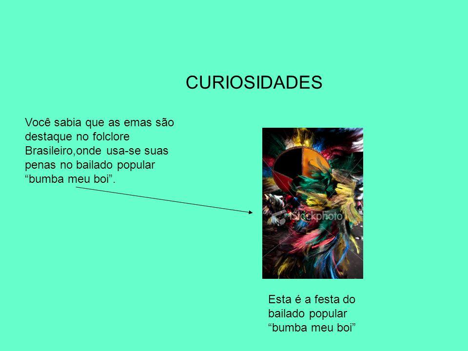 CURIOSIDADES Você sabia que as emas são destaque no folclore Brasileiro,onde usa-se suas penas no bailado popular bumba meu boi .