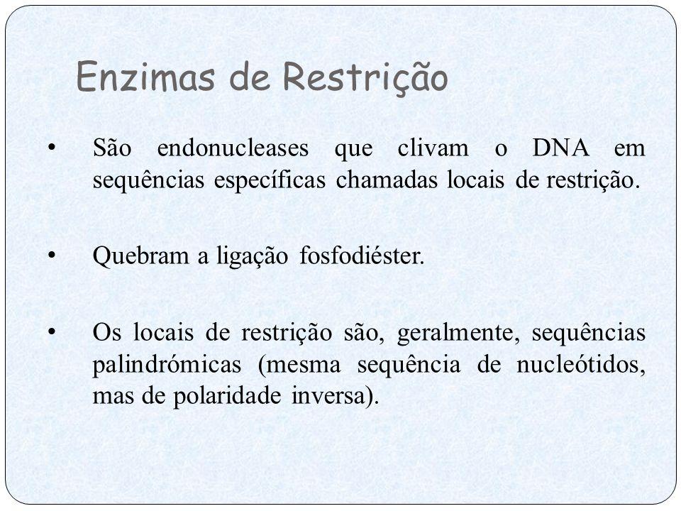 Enzimas de Restrição São endonucleases que clivam o DNA em sequências específicas chamadas locais de restrição.