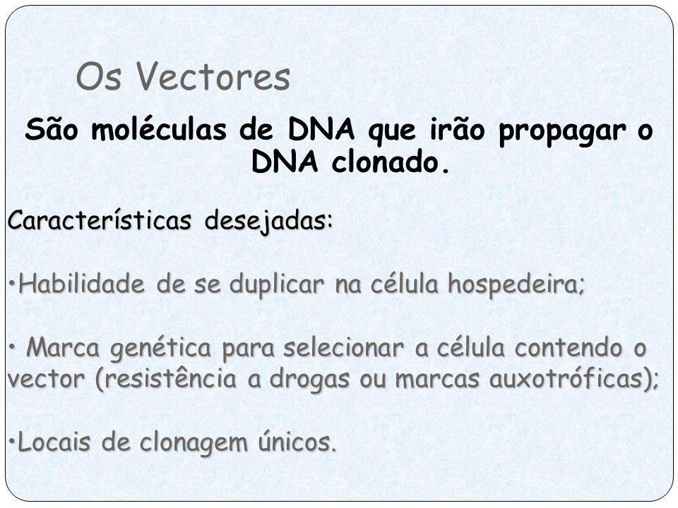 São moléculas de DNA que irão propagar o DNA clonado.