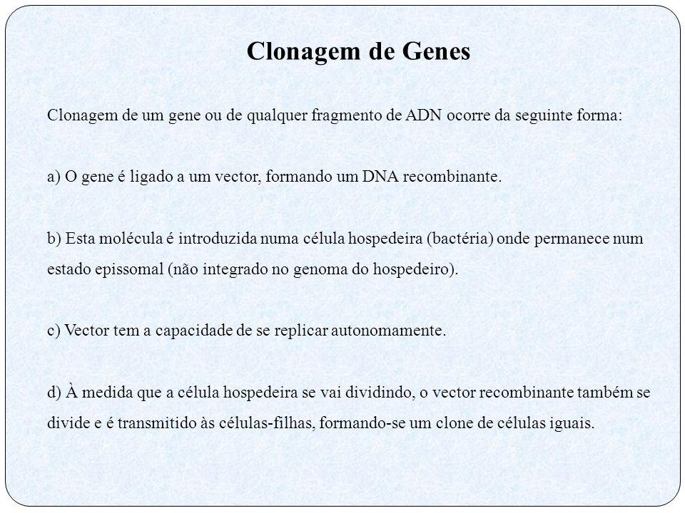 Clonagem de Genes Clonagem de um gene ou de qualquer fragmento de ADN ocorre da seguinte forma: