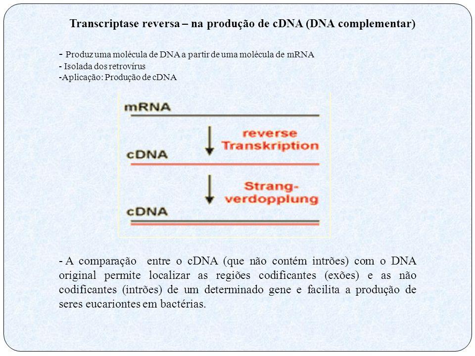 Transcriptase reversa – na produção de cDNA (DNA complementar)