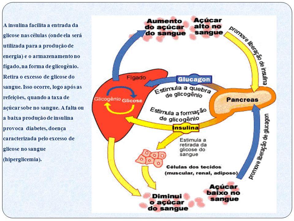 A insulina facilita a entrada da glicose nas células (onde ela será utilizada para a produção de energia) e o armazenamento no fígado, na forma de glicogênio.