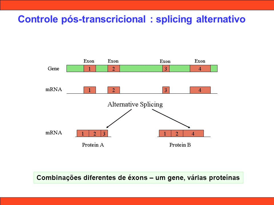 Controle pós-transcricional : splicing alternativo