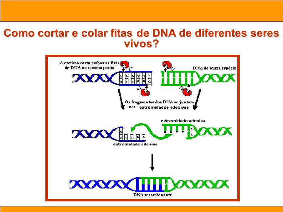 Como cortar e colar fitas de DNA de diferentes seres vivos