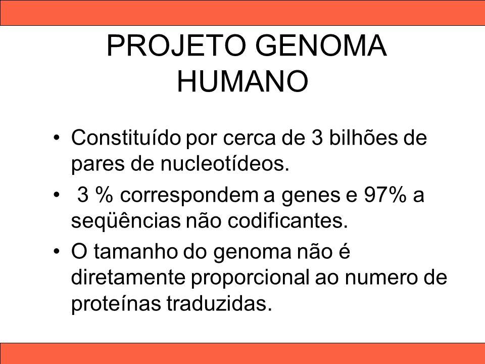 PROJETO GENOMA HUMANO Constituído por cerca de 3 bilhões de pares de nucleotídeos. 3 % correspondem a genes e 97% a seqüências não codificantes.