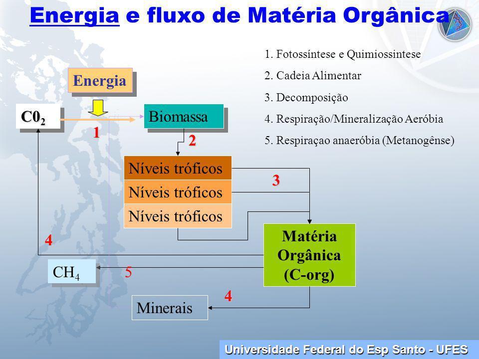 Energia e fluxo de Matéria Orgânica Matéria Orgânica (C-org)