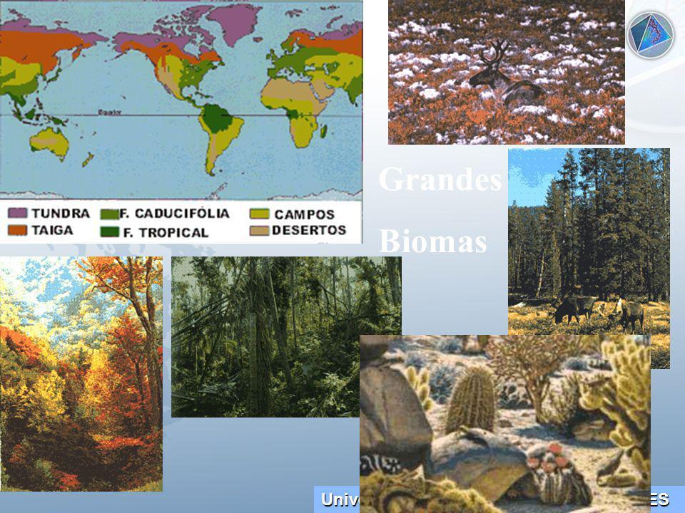 Grandes Biomas