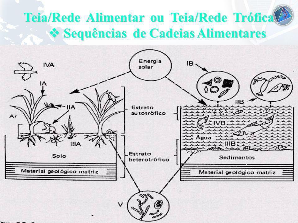 Teia/Rede Alimentar ou Teia/Rede Trófica