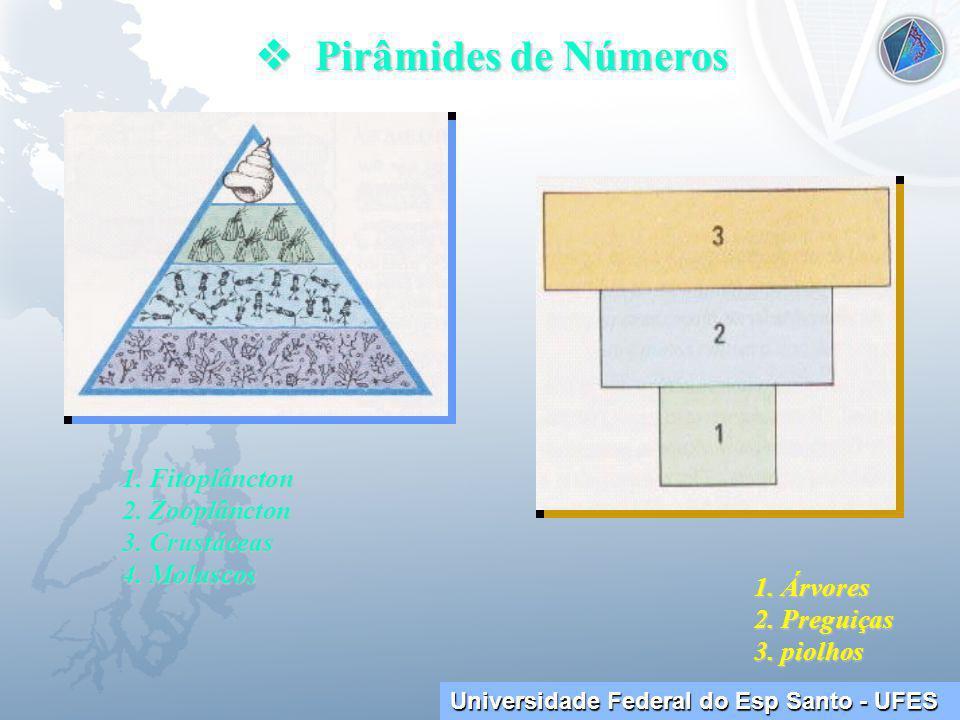  Pirâmides de Números 1. Fitoplâncton 2. Zooplâncton 3. Crustáceas