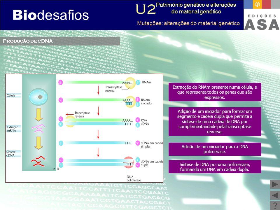 Biodesafios U2 Património genético e alterações do material genético