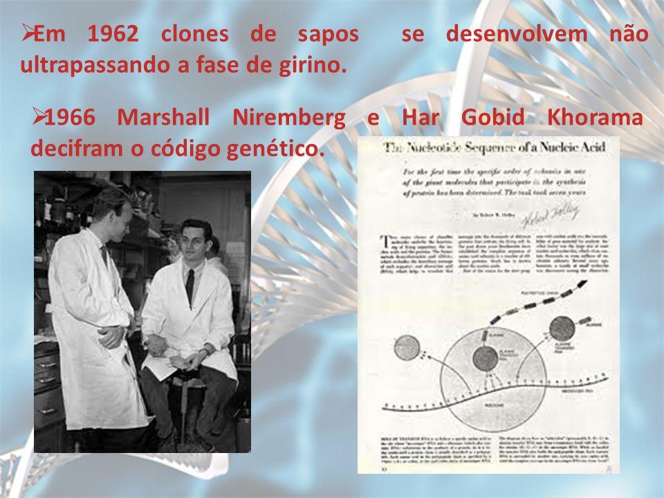 Em 1962 clones de sapos se desenvolvem não ultrapassando a fase de girino.