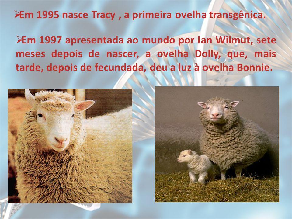 Em 1995 nasce Tracy , a primeira ovelha transgênica.