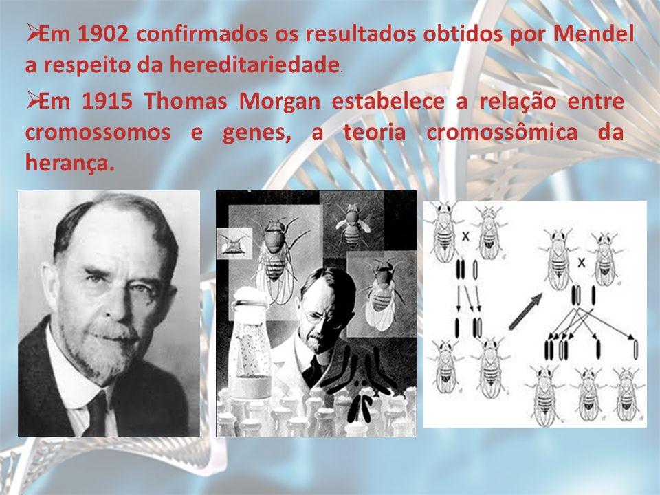 Em 1902 confirmados os resultados obtidos por Mendel a respeito da hereditariedade.
