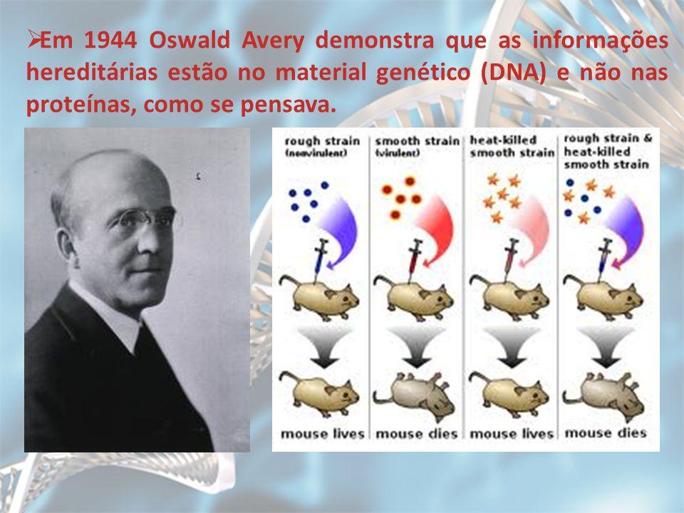 Em 1944 Oswald Avery demonstra que as informações hereditárias estão no material genético (DNA) e não nas proteínas, como se pensava.