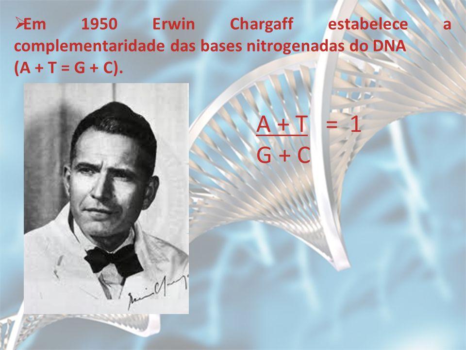 Em 1950 Erwin Chargaff estabelece a complementaridade das bases nitrogenadas do DNA