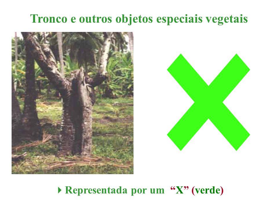 Tronco e outros objetos especiais vegetais