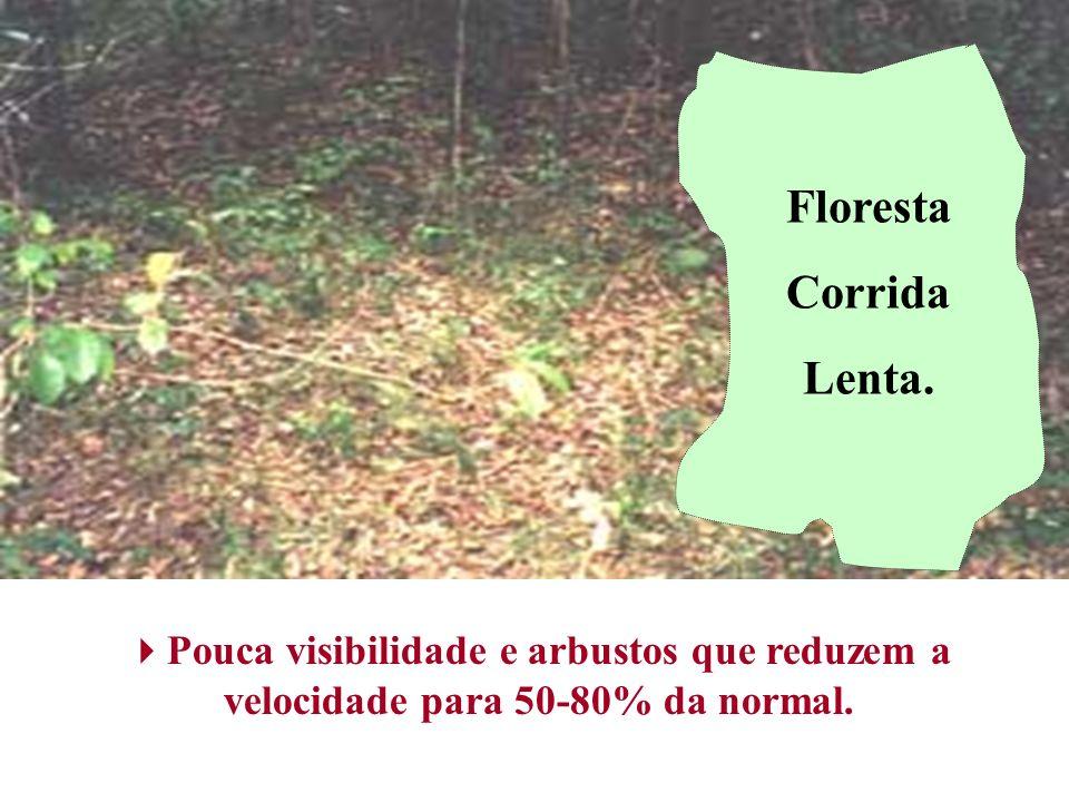 Floresta Corrida Lenta.