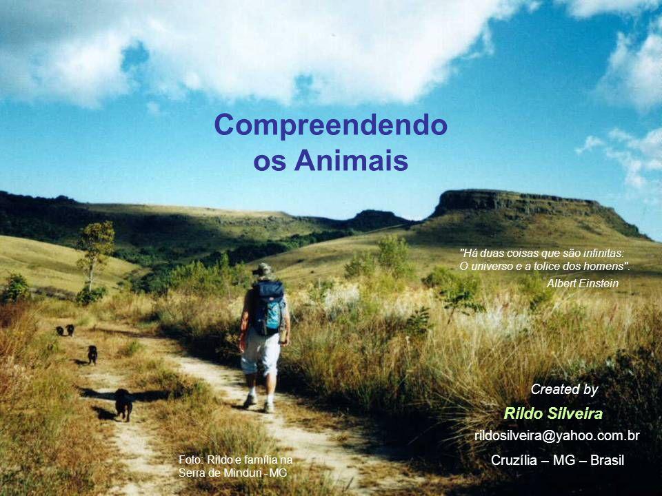 Compreendendo os Animais