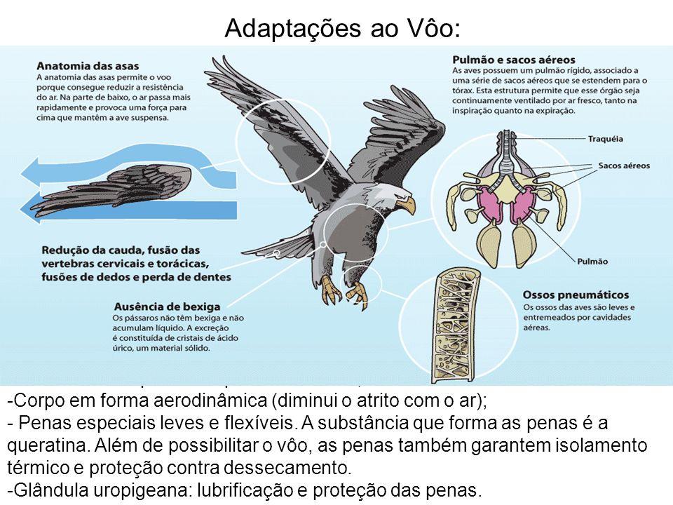 Adaptações ao Vôo: Osso esterno apresenta quilha ou carena;