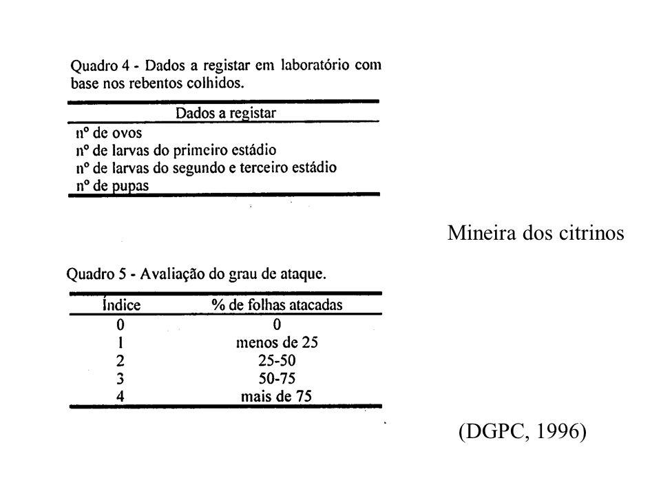 Mineira dos citrinos (DGPC, 1996)