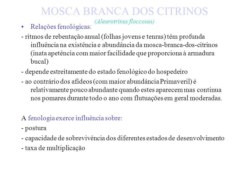 MOSCA BRANCA DOS CITRINOS (Aleurotrixus floccosus)
