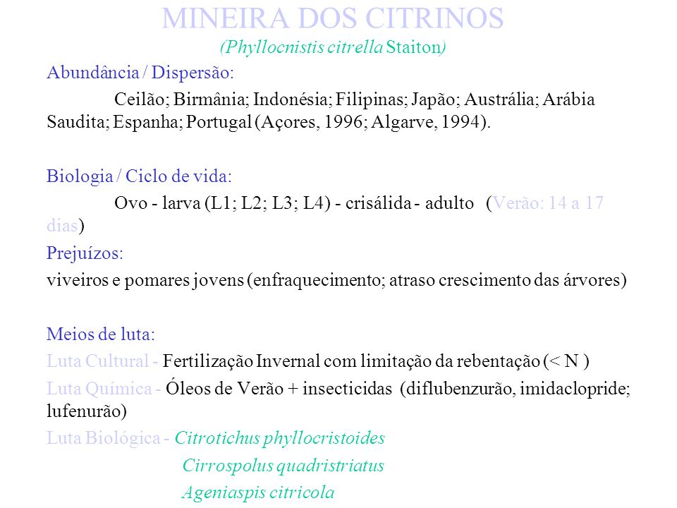 MINEIRA DOS CITRINOS (Phyllocnistis citrella Staiton)