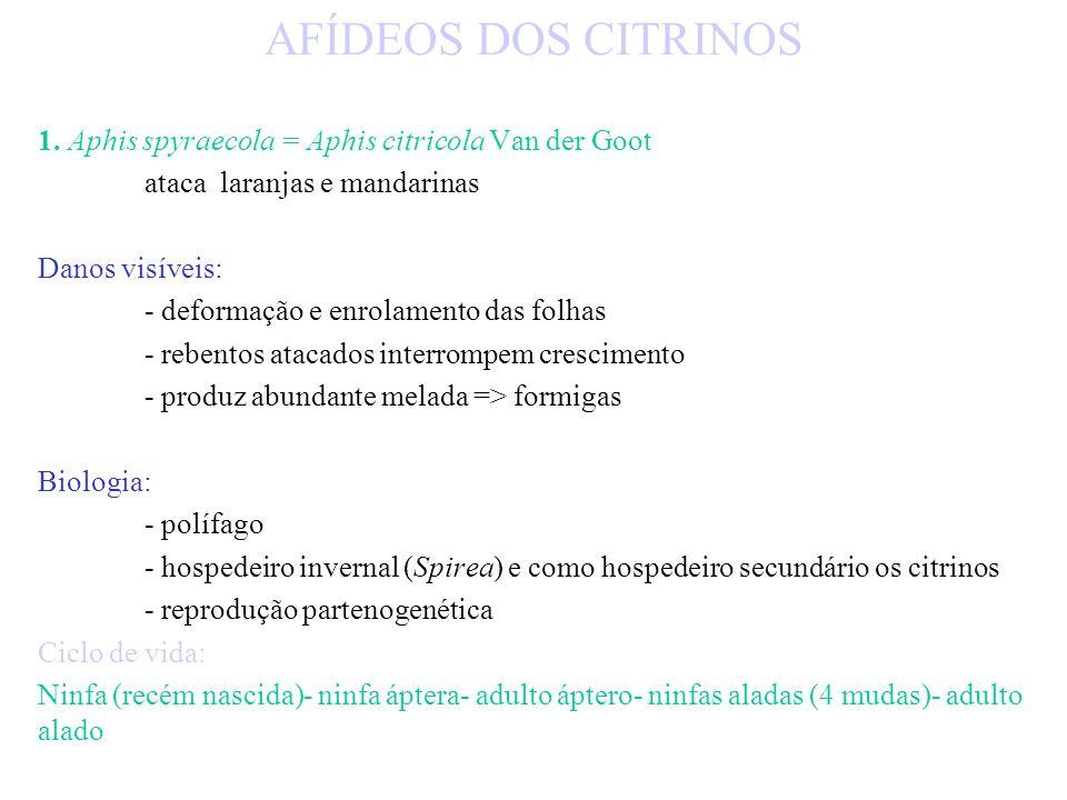 AFÍDEOS DOS CITRINOS 1. Aphis spyraecola = Aphis citricola Van der Goot. ataca laranjas e mandarinas.