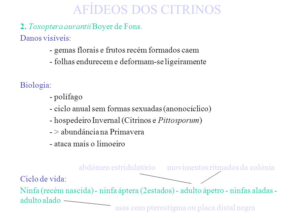 AFÍDEOS DOS CITRINOS 2. Toxoptera aurantii Boyer de Fons.