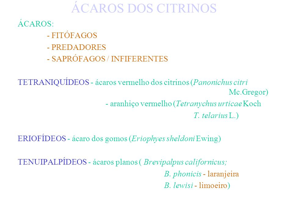 ÁCAROS DOS CITRINOS ÁCAROS: - FITÓFAGOS - PREDADORES