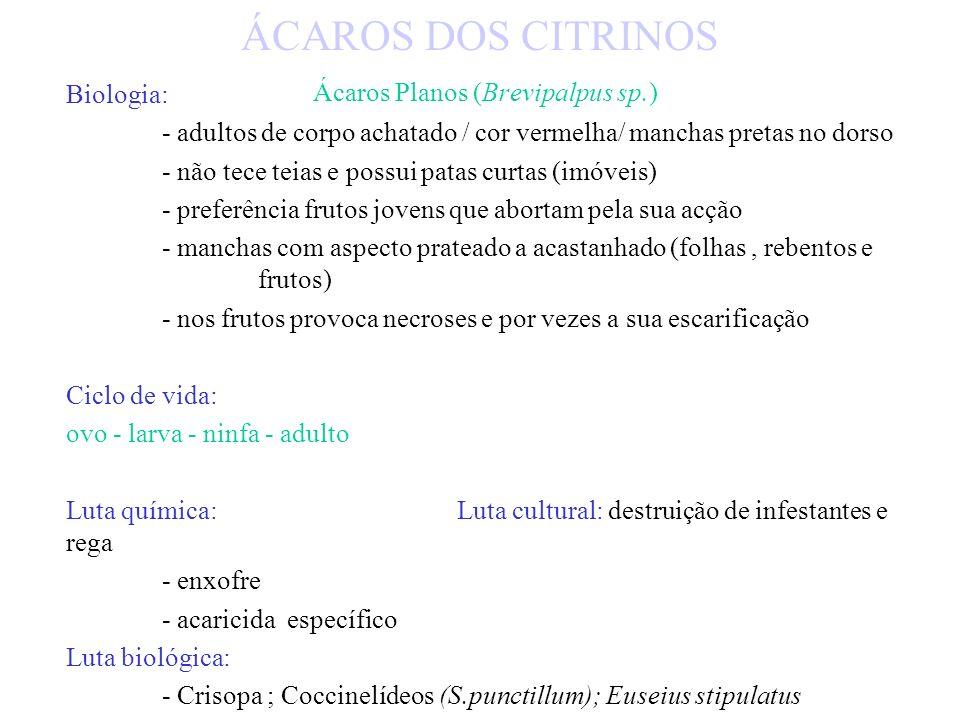 ÁCAROS DOS CITRINOS Ácaros Planos (Brevipalpus sp.)