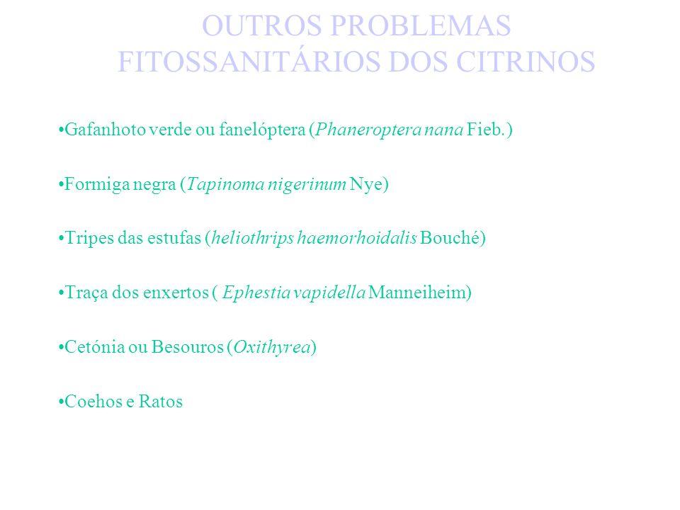 OUTROS PROBLEMAS FITOSSANITÁRIOS DOS CITRINOS