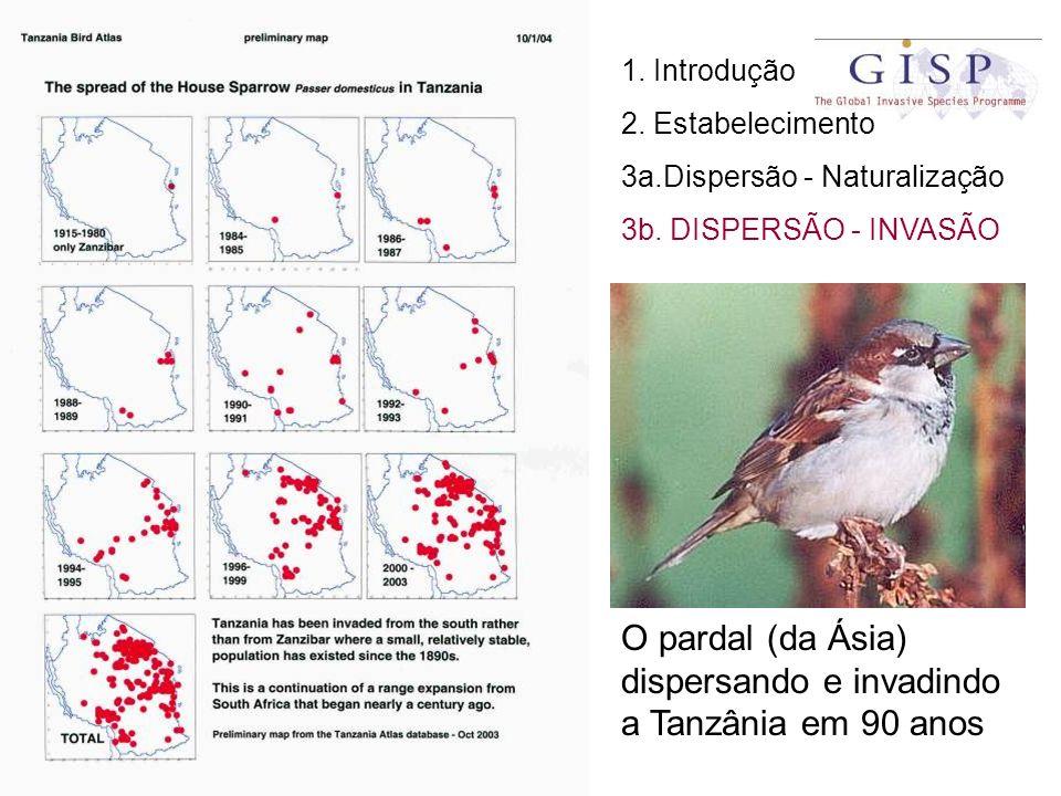 O pardal (da Ásia) dispersando e invadindo a Tanzânia em 90 anos