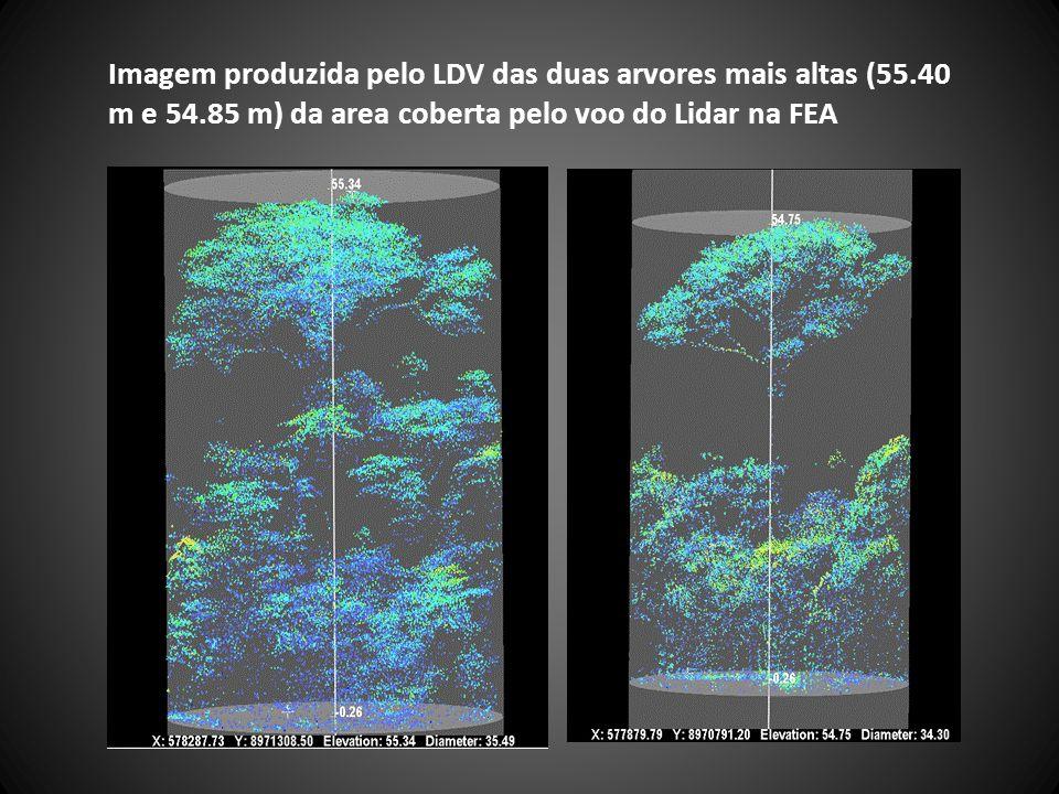 Imagem produzida pelo LDV das duas arvores mais altas (55. 40 m e 54