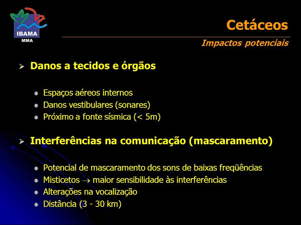 Cetáceos Impactos potenciais