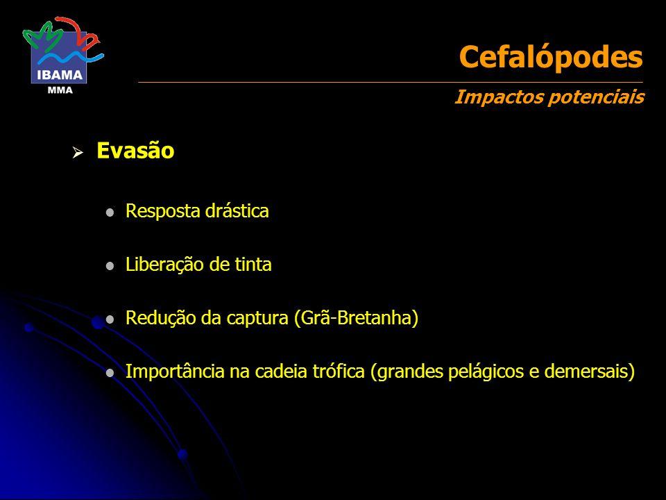 Cefalópodes Impactos potenciais