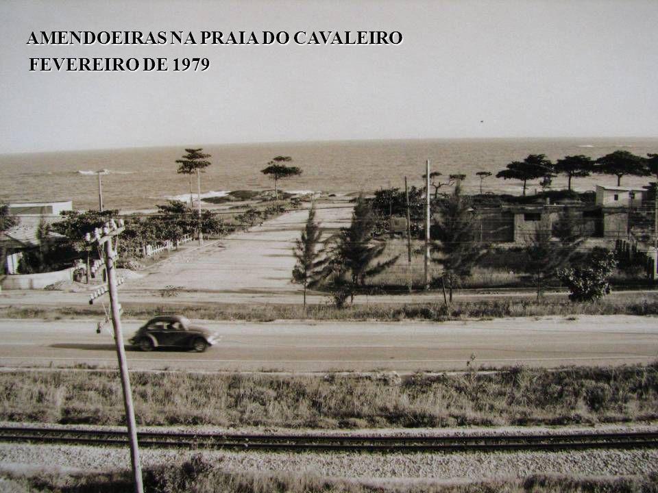AMENDOEIRAS NA PRAIA DO CAVALEIRO