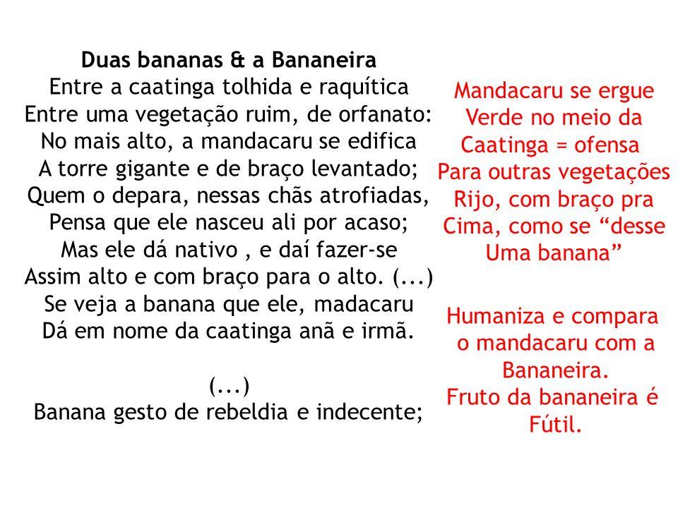 Duas bananas & a Bananeira