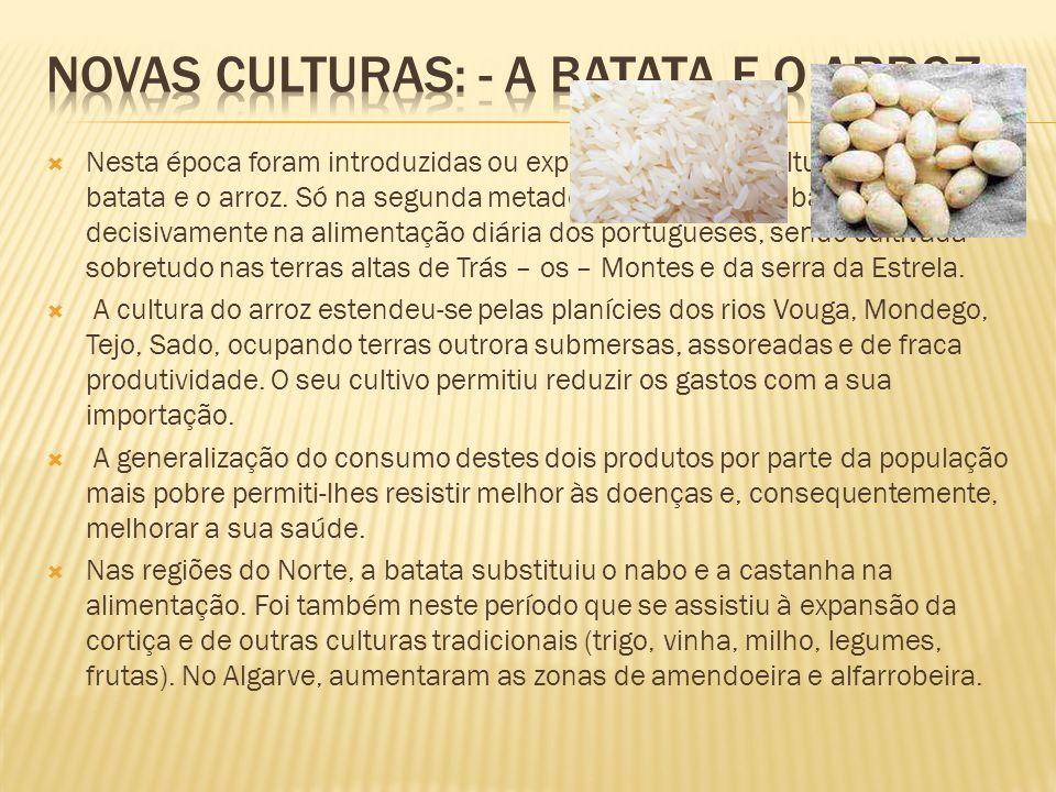 Novas culturas: - a batata e o arroz