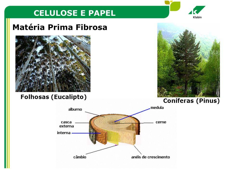 CELULOSE E PAPEL Matéria Prima Fibrosa Folhosas (Eucalipto)