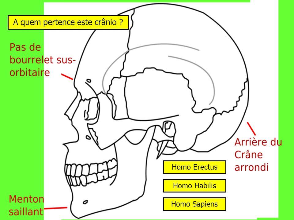 A quem pertence este crânio