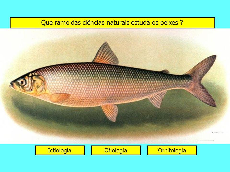 Que ramo das ciências naturais estuda os peixes