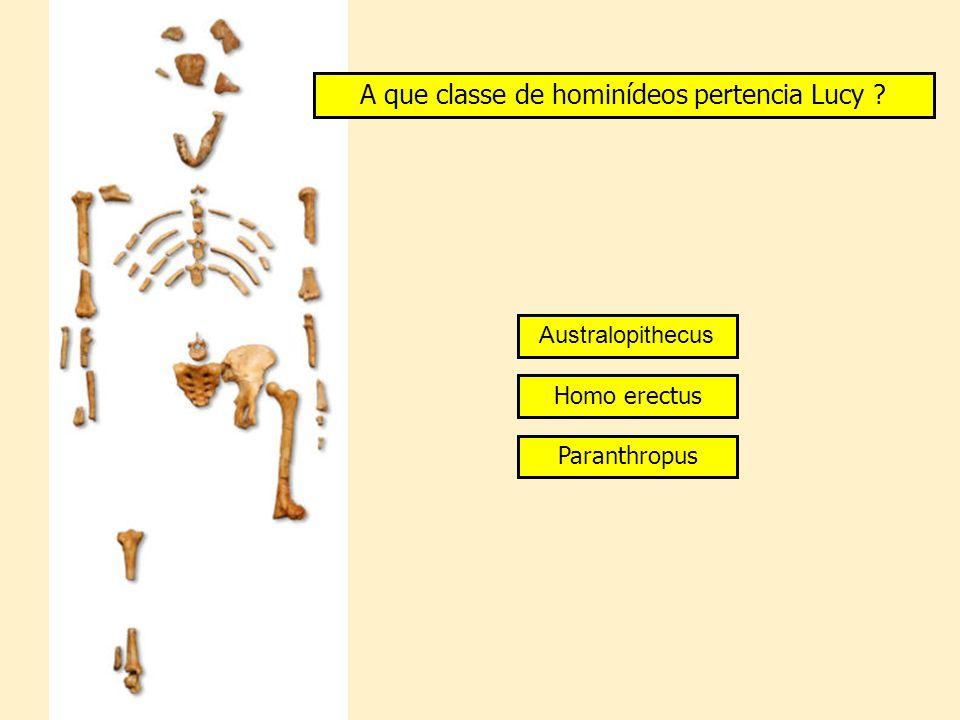 A que classe de hominídeos pertencia Lucy