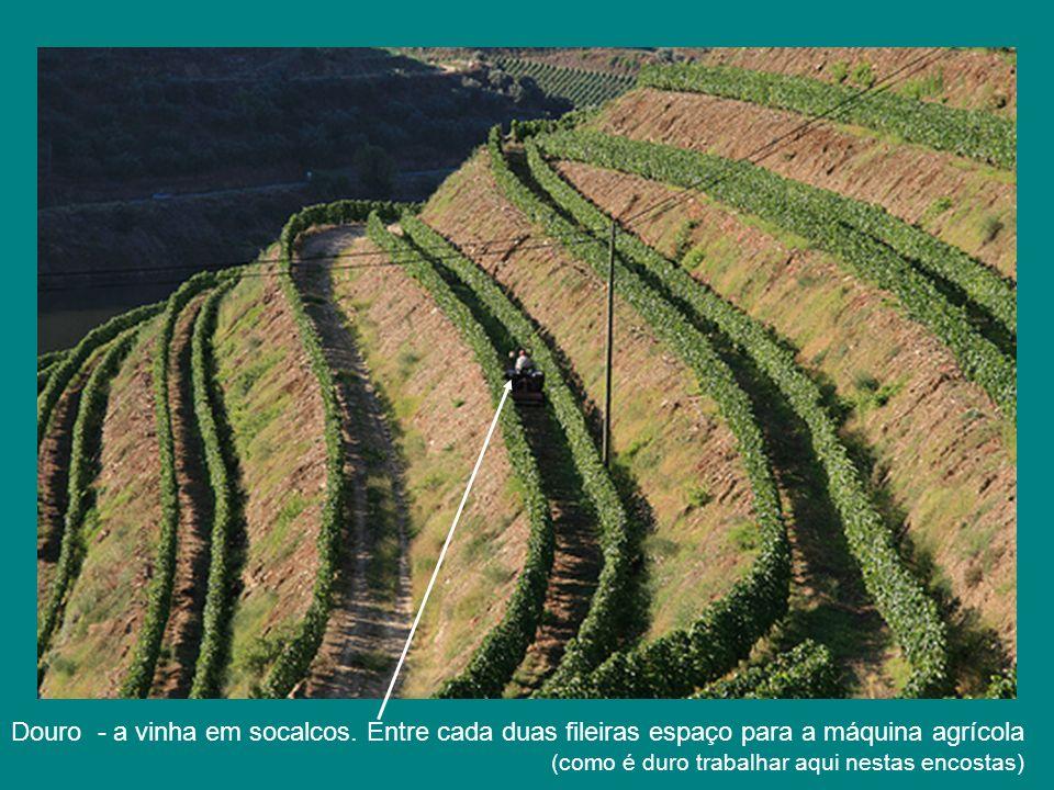 Douro - a vinha em socalcos