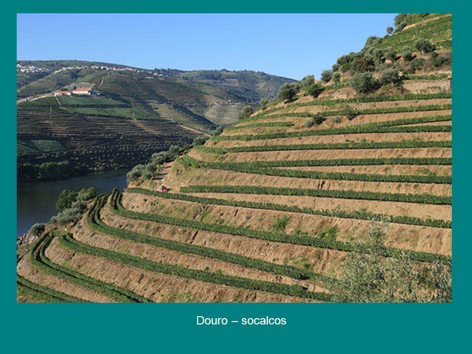 Douro – socalcos