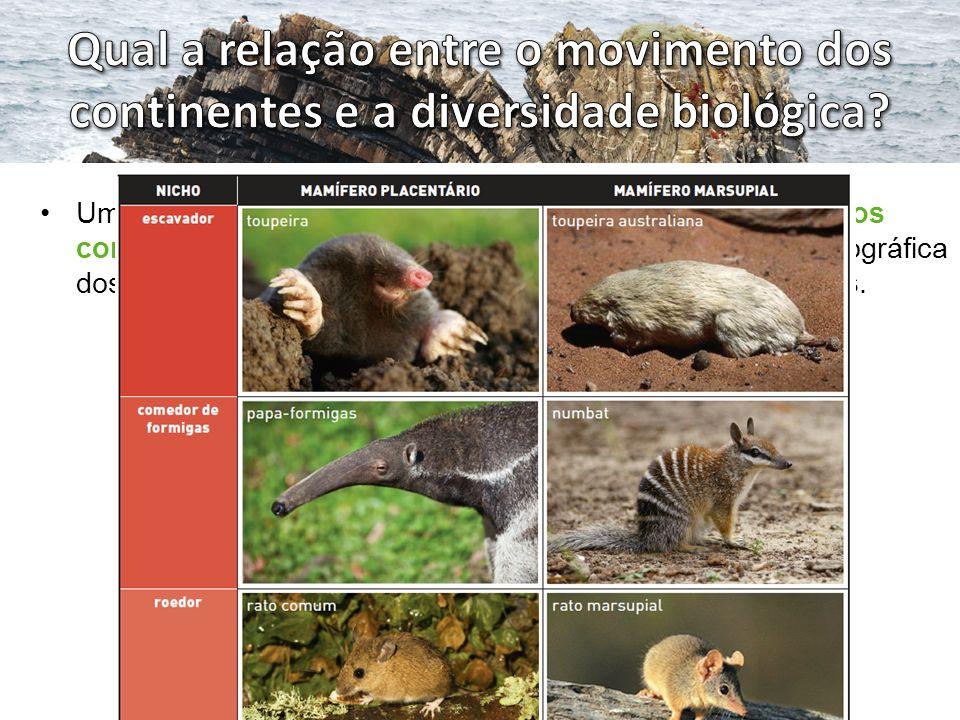 Qual a relação entre o movimento dos continentes e a diversidade biológica